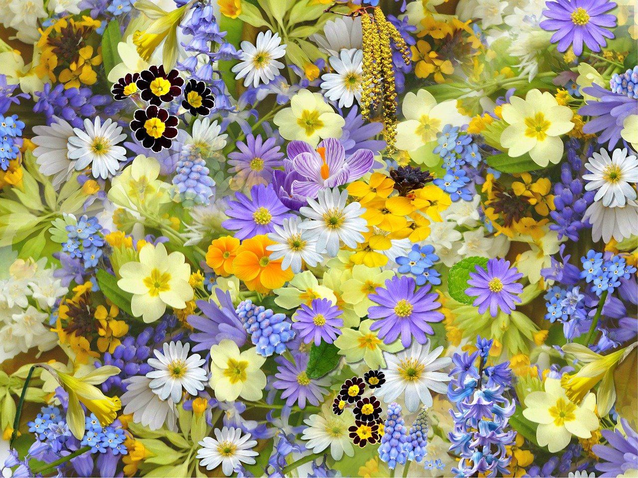 spring flowers, flowers, collage
